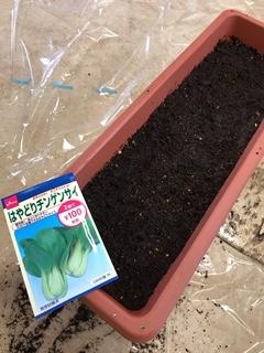 チンゲン菜をプランターに種まきしたところ