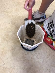 鉢に土を入れているところ