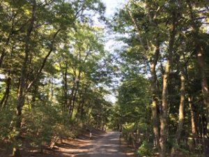 濃溝の滝までの歩道