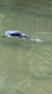 丁度水に潜るところの鳥