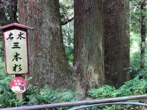 霊木三本杉