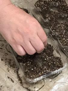 卵パックの一つのくぼみに種をまいているところ
