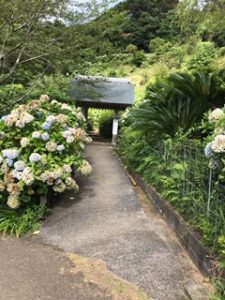紫陽花を鑑賞できる丘の道