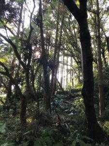 木の木陰の隙間