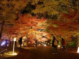 埼玉県森林公園紅葉見ナイト