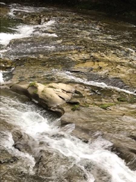 流れが急な場所(養老川)