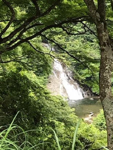 上から見た粟又の滝